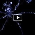 Embryons et larves