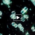 Le plancton